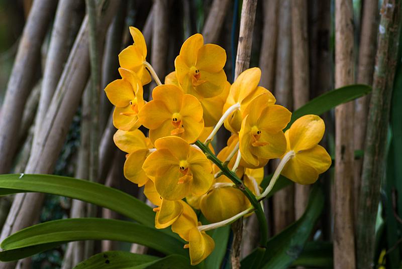 Flora 04
